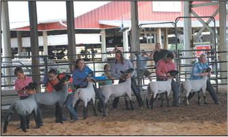 Washington County Fair Junior Livestock  Auction Celebrates 50 Years