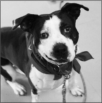 Washington County Humane Society Remains Open